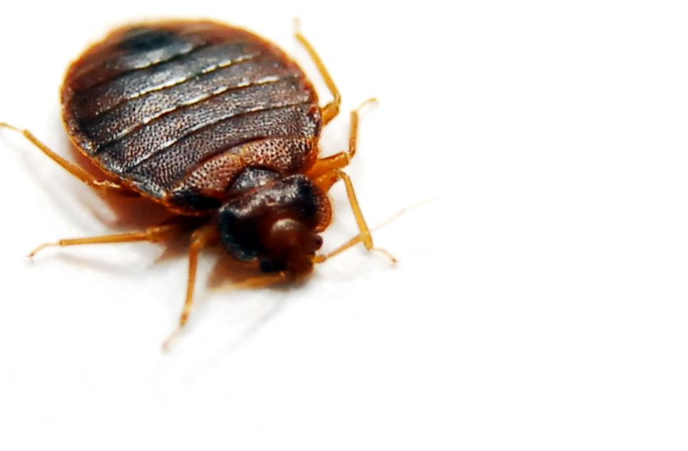 Bed Bug Pest Control Near Me Is A Local Bug Exterminator In